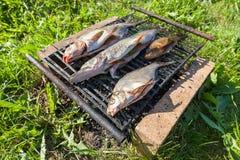 Fresh fish prepared for smoking Stock Image
