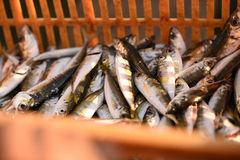 Fresh fish. Fresh and raw anchovy, sprats and saurel just caught from the sea and sold in the local market Royalty Free Stock Photography
