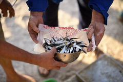 Fresh fish. Fresh and raw anchovy, sprats and saurel just caught from the sea and sold in the local market Royalty Free Stock Photos