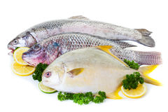 Fresh Fish. Fresh raw fish display with lemon and lime on a white background Stock Images