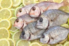 Fresh fish. Stock Photography