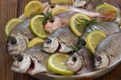 Fresh fish. Royalty Free Stock Image