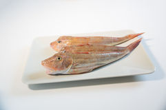 Fresh fish  with red scales Royalty Free Stock Photos