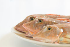 Fresh fish  with red scales Royalty Free Stock Image