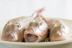 Fresh fish  with red scales Stock Photography