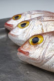 Fresh fish, red snapper. In a plate Royalty Free Stock Images