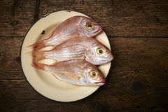 Fresh fish, red snapper. In a plate Royalty Free Stock Photos