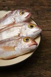 Fresh fish, red snapper. In a plate Stock Photo