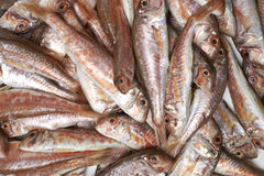 Fresh fish, red snapper. In a plate Stock Image