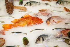 Fresh fish at the restaurant. A variety of fresh fish stored on ice at the restaurant Royalty Free Stock Image