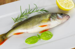 Fresh fish with rosemary Stock Image