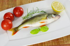 Fresh fish with rosemary Stock Images