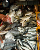 Fresh fish for sale. In an open doors wet market Stock Photography