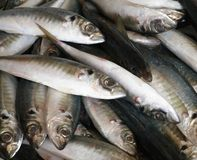Fresh Fish for Sale Royalty Free Stock Images