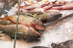 Fresh fish for sale Royalty Free Stock Photo