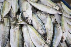 Fresh Fish For Sale. Heap of fresh fish for sale at Shindagha Market, Bur Dubai, Dubai, UAE Stock Photography