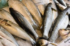 Fresh fish for sale. On the market for fish farm production Royalty Free Stock Photography