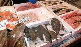 Fresh fish on sale in fish market Stock Images