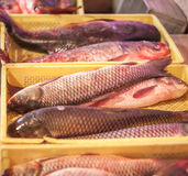Fresh fish for sale in fresh market.  Royalty Free Stock Photos