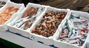 Fresh fish for sale at the harbor. Fresh fish for sale at the market of the harbor Stock Image