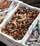 Fresh fish for sale at the harbor Stock Photography