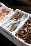 Fresh fish for sale at the harbor. Fresh fish for sale at the market of the harbor Stock Photo