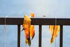 Fresh fish for sale at Lake Ashi. Fresh fish for sale after fishing at Lake Ashi, Hakone Stock Image