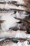 Fresh fish for sale at the local town market stall. Fresh fish for sale lined up at the local town market stall Royalty Free Stock Photography