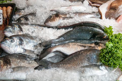 Fresh fish for sale at the local town market stall. Fresh fish for sale lined up at the local town market stall Stock Photography