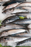 Fresh fish for sale at the local town market stall Stock Photography