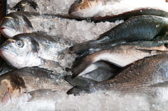 Fresh fish for sale at the local town market stall. Fresh fish for sale lined up at the local town market stall Stock Images