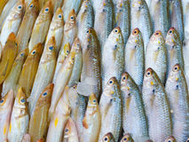 Fresh fish for sale Stock Photography