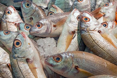 Fresh fish for sale. At the market Stock Photo