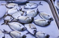 Fresh fish for sale in the fish market of Catania, Sicily.  royalty free stock photos