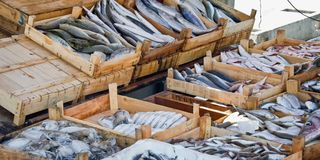 Fresh fish on sale on the market of the harbour of Bodrum Turkey. Fresh fish on sale on the market of the harbour of Bodrum, Turkey Stock Photo