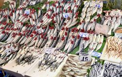 Fresh fish. On sale at a fish market in Istanbul, Turkey Royalty Free Stock Image