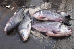 Fresh fish on sale in market, Pune. Maharashtra Royalty Free Stock Images