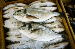 Fresh Fish For Sale in a Market in Turkey Royalty Free Stock Photography