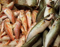 Fresh Fish For Sale Royalty Free Stock Photos