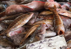 Fresh Fish For Sale Royalty Free Stock Image