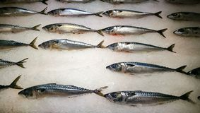 Fresh fish on sale royalty free stock photography