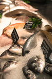 Fresh Fish on Sale in Shop with Ice Royalty Free Stock Photos