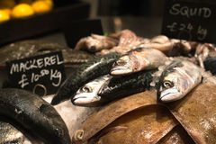 Fresh Fish on Sale in Shop with Ice. Fresh Fish on Sale in Fish Shop Stock Image