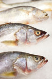 Fresh fish for sale. In supermarket Royalty Free Stock Images