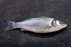 Fresh fish sea bass on dark background. Top view Stock Photo