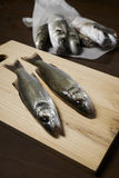 Fresh fish, sea bass. Ready for cooking Stock Photos