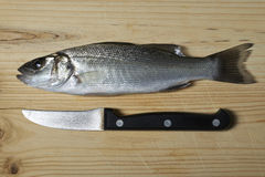Fresh fish, sea bass. Ready for cooking Royalty Free Stock Photography