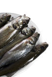 Fresh fish, sea bass. Ready for cooking, isolated Royalty Free Stock Photos