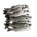Fresh fish, sea bass. Ready for cooking, isolated Stock Photos