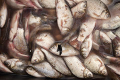 Fresh fish from sea market Royalty Free Stock Photography